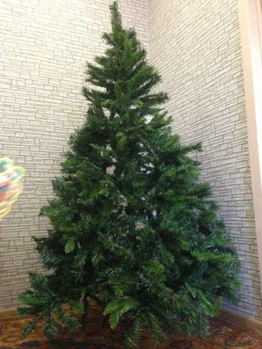 Yeni il ağacı,1,8 m hündürlüyü var .Yeni ilə yaxın bahalaşacaq 120