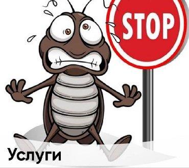 Дизинфекция квартир и домов от клопов тараканов и д.р. гарантия