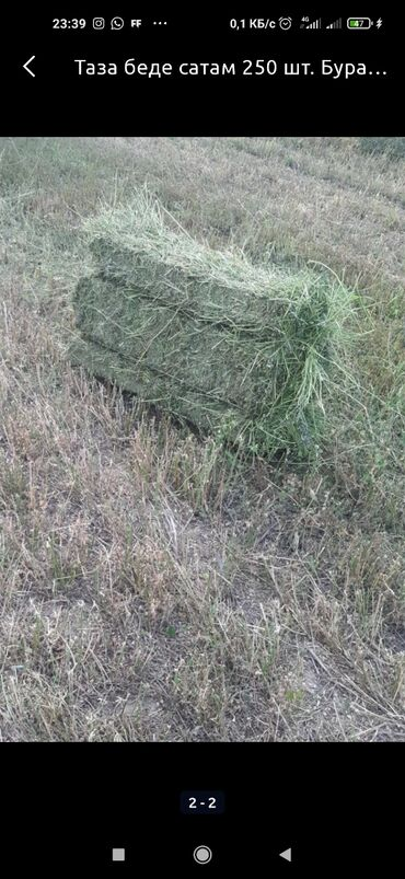 Животные - Садовое (ГЭС-3): Продаю сатам тюк, сено чистый, таза беде с поля
