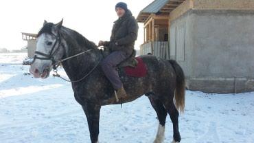 Продоется срочно в Бишкек