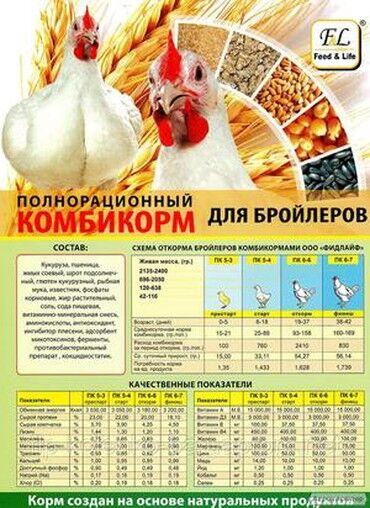 цены-на-ячмень-в-кыргызстане в Кыргызстан: Спец корм для бройлера цыплят индюшат бройлер-цыплята-индюшата