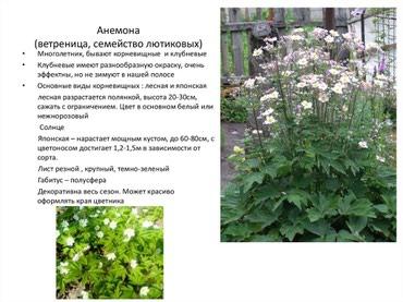 Принимаю заказы на многолетние кустарники, декоративные растения в Лебединовка