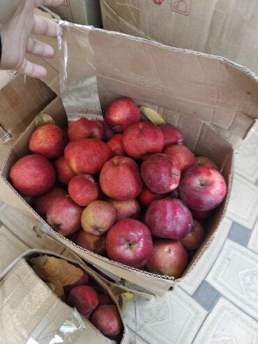 Овощи, фрукты - Кыргызстан: Таластын алмасы сатылат