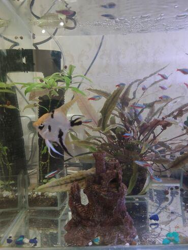 Продаю аквариум на 100 литров. Вместе с рыбками, водорослями, лампой
