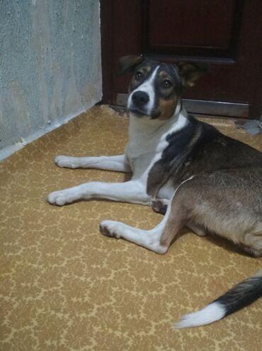 3772 объявлений: 7ми месячная собачка,девочка,характер:очень умная,спокойная и
