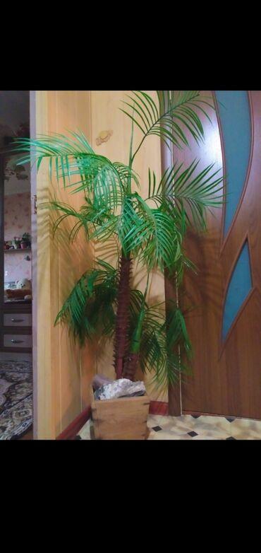 Комнатные растения - Беловодское: Продам