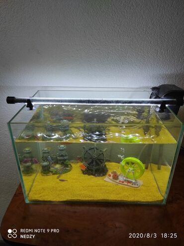 Pumpa za vodu - Srbija: Akvarijum kompletno sa ribicama (Sve) Akvarijum kompletan sa