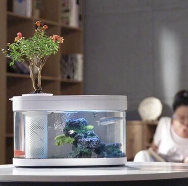 Аквариумы - Кыргызстан: Мини аквариумы от фирмы Xiaomi (10 литров)    Мини Аквариум от Xiaomi