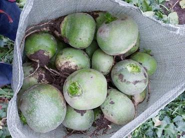 Все для дома и сада - Сокулук: Продаю семена семеник семян редька маргиланская хорошего качество