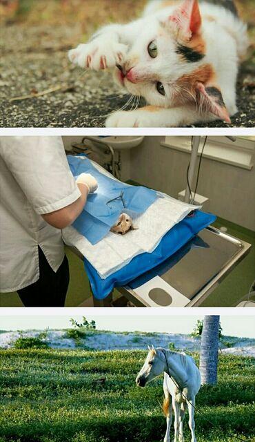 ветеринар бишкек in Кыргызстан | УСЛУГИ ВЕТЕРИНАРА: Ветеринарные услуги!Ветеринардык кызмат корсотуу!диагностика и
