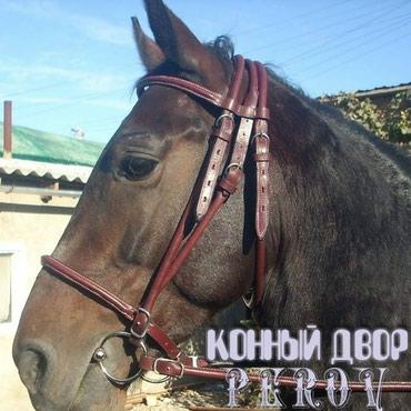 Уздечка в Бишкек
