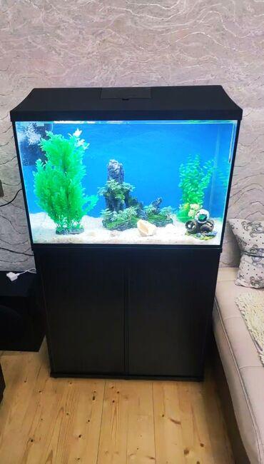 8140 elan: Akvarium baliq akvarum balıq akvariumuAquael akvariumUzunu 75