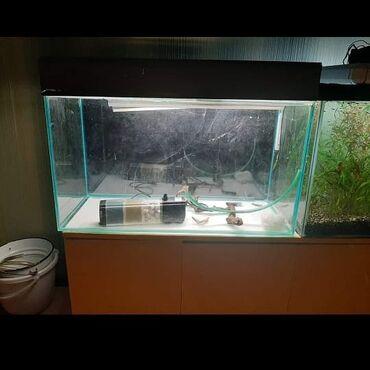 Akvariumlar - Azərbaycan: Salamlar zbor akvarium satilir icinin hazir quruntu filtr qizdirici ic