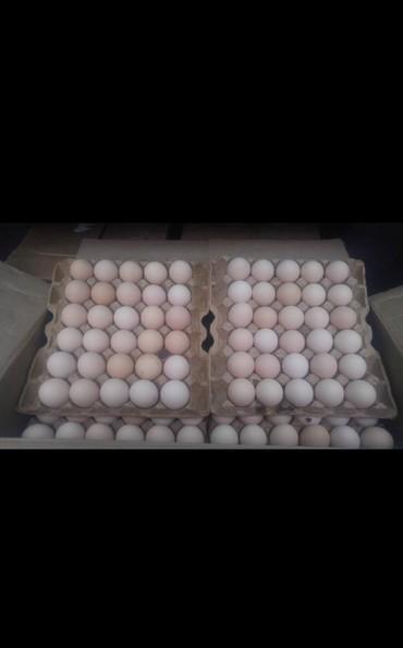 Продаю яйца куриные, крупные! Дёшево!!! Только оптом! На инкубацию не