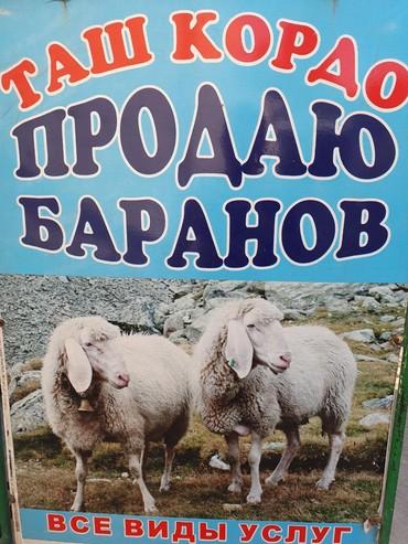 Кой, козу сатылат.  в Бишкек