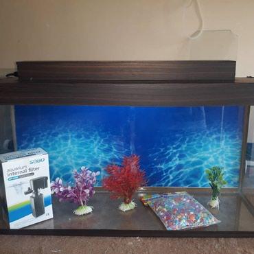 Bakı şəhərində Teze akvarium herweyi ile birlikde  icindekiler hava veren filtir,