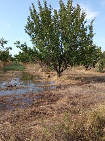 ара в Кыргызстан: Продам 15000 соток Для сельского хозяйства от собственника