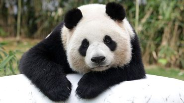 "Команда ""Панда"" поможет Вам в Бишкек"
