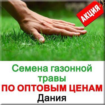 теплый пол под ковер бишкек цена в Кыргызстан: Семена европейской газонной травы от фирмы DLF! (АДАПТИРОВАНЫ ПОД