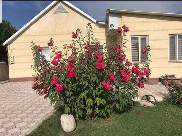 как подключить канализацию в бишкеке в Кыргызстан: Продам Дом 150 кв. м, 6 комнат