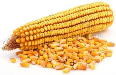 Животные - Кант: Продаю кукурузу рушеную только оптом