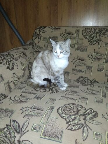 Коты - Беловодское: Отдам двух кошек в добрые руки, с