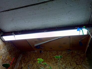 Продам светодиодные лампы 120см по 100с 4шт