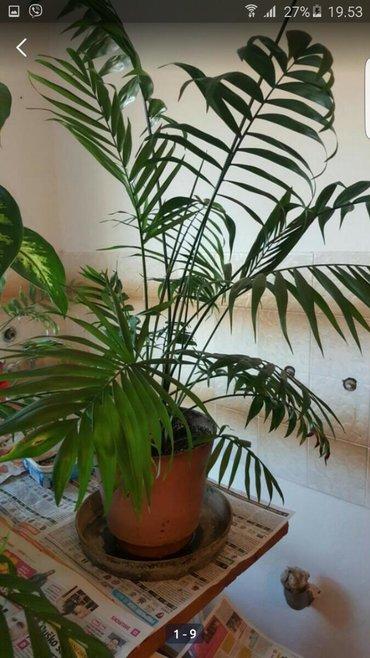 Sobne biljke Od 1000 do 1500