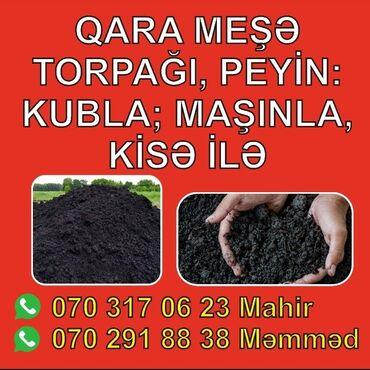 Toxumlar və çöl bitkiləri - Azərbaycan: Sumqayıtda Bakıda qara torpaq, peyin