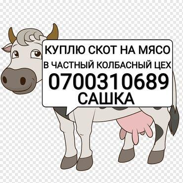 С/х животные - Кыргызстан: КУПЛЮ В ЧАСТНЫЙ КОЛБАСНЫЙ ЦЕХ СКОТ ЛЮБОЙ УПИТАННОСТИПРИЕЗЖАЮ САМ. БЕЗ