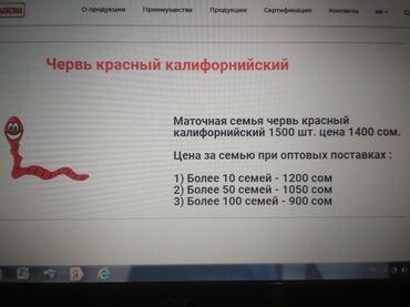 Продается червь красный Калифорнийский семьями по 1500 шт за 1400