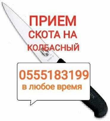 прием макулатуры бишкек адреса в Кыргызстан: Прием в колбасный цех:Лошадей коров телок быковЛюбой упитанности и