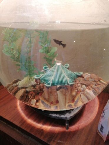 Круглые аквариумы с рыбками и без
