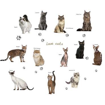 Bakı şəhərində Kediler, кошки, коты. yapışqanlar, наклейки.