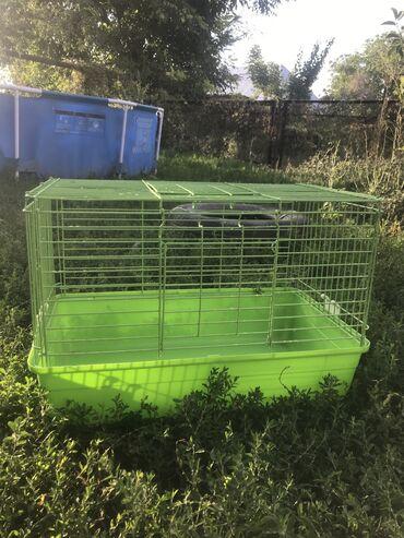 Животные - Мыкан: Клетка для кроликов,крыс,морских свинок и.т.дреальным клиентам отдам