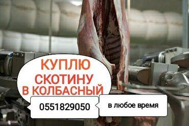 Животные - Кыргызстан: Куплю забой коров телок лошадейв колбасный цехв любое время суток и