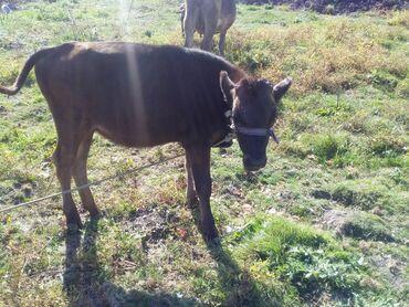Другие животные - Беловодское: Кунажын