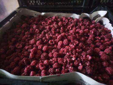 Арзан кыздар сокулук - Кыргызстан: Прадою Замороженные ягоды. ( Клубника и малина ). Ягоды на данный