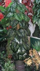 bitkiler - Azərbaycan: Suni bitkiler . buyurun sifariw edin .catdrilma var anbardan satiş