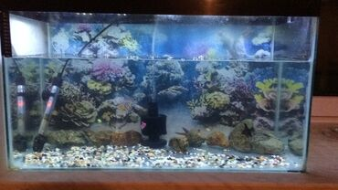 36 elan   HEYVANLAR: 100 literlik akvarium. Termometir ve filter üstünde verilecek. Filter
