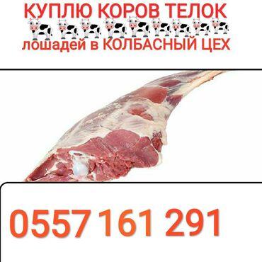 Куплю скот в колбасный цех в любое время
