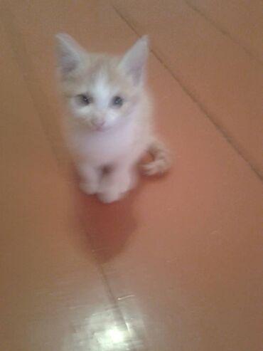Чудесный .милый рыжий мальчик.срочно ищет новый дом. Котенку
