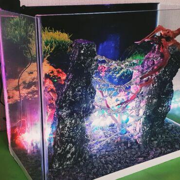 Животные - Баку: Аквариум.Внимание!!! Новый проект от компании aquagallery.Az.В