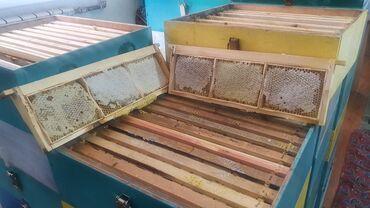 847 объявлений: Продаю мёд в сотовый
