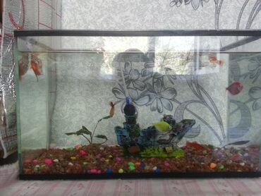 ходунки рыбки в Кыргызстан: Продаю аквариум со всем что на картинке с рыбками и компрессором