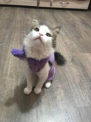 Коты - Кыргызстан: Срочно!!! Котеночек ищет новых хозяинов!! Ласковая добрая