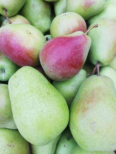11 объявлений: Продам яблоки грушы, Иссыккульский более 10 тонн