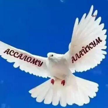 одежда для беременных в Кыргызстан: Швея Прямострочка. С опытом. Кызыл Аскер