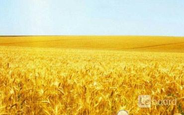 с х в Кыргызстан: Продажа соток