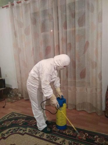 Делаю обработку от клопов,блох и др.и в Бишкек